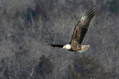 Photograph - On The Wings Of An Eagle by Linda Shannon Morgan