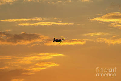 Photograph - On The Wings Of The Sun by David Arment