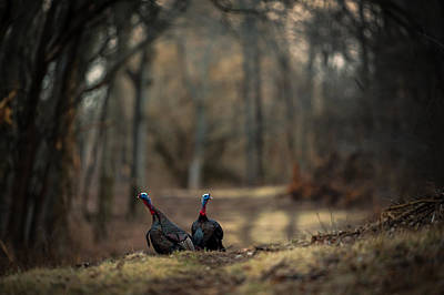 Photograph - On The Woodlot Path by Jeff Phillippi
