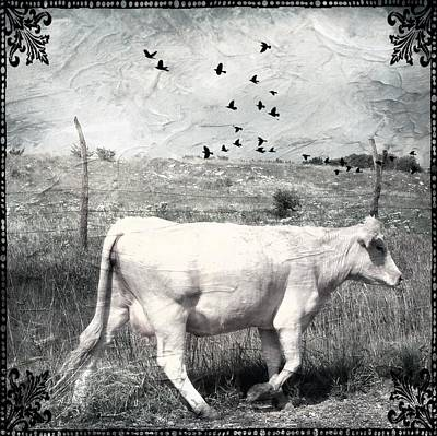 Photograph - On To Greener Pastures Charolais Cattle Art by Michele Carter