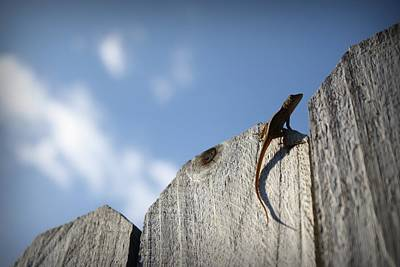 Brown Anole Photograph - On Top Of The World by Mandy Shupp