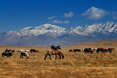Photograph - Onaqui Wild Horses by Greg Norrell