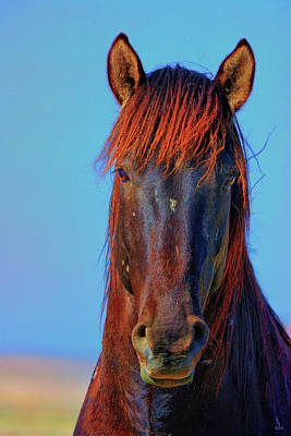 Photograph - Onaqui Wild Stallion Portrait by Greg Norrell