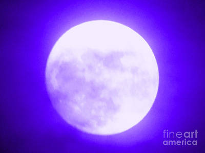Photograph - Once In A Purple Moon by Carol Eliassen