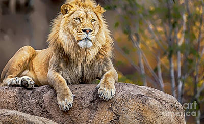 Lion Photograph - Once Upon A Time by David Millenheft