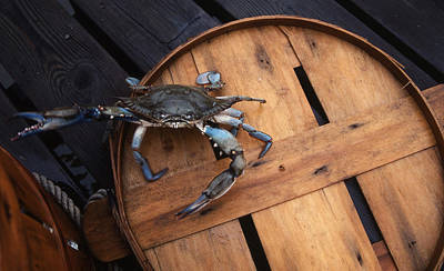 Bushel Photograph - One Angry Crab by Skip Willits