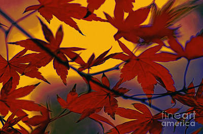 Maple Leaf Art Photograph - One Autumn Evening By Kaye Menner by Kaye Menner