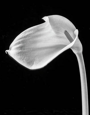 Photograph - One Beautiful Calla Lily In Black And White by Garry Gay