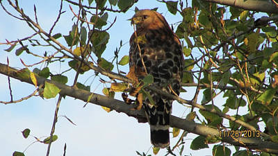 Rock Royalty - One Beautiful Hawk by Kathleen J Beller