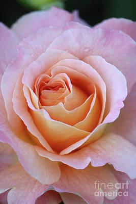 One Beautiful Pink Rose Art Print by Carol Groenen
