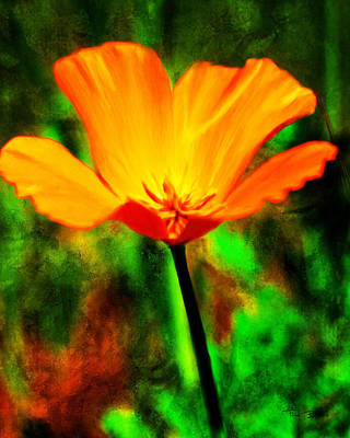 Painting - One California Poppy by Fred Baird