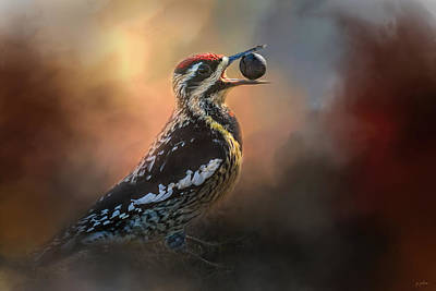 Sapsucker Wall Art - Photograph - One Cracked Nut by Jai Johnson