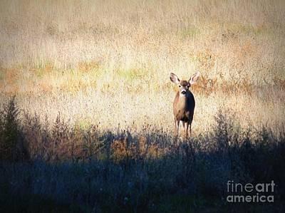 One Cute Deer Art Print by Carol Groenen