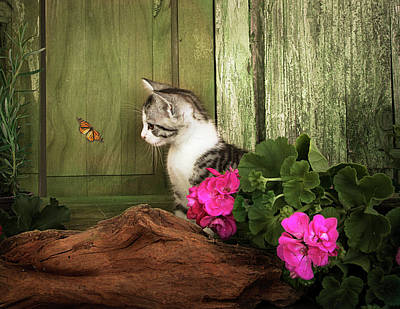 Photograph - One Cute Kitten Waiting At The Door by Ethiriel Photography