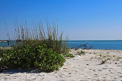 Photograph - One Day At Boca Grande by Michiale Schneider