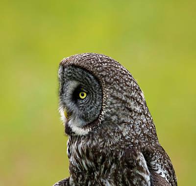 Photograph - One Eye by Doug Lloyd