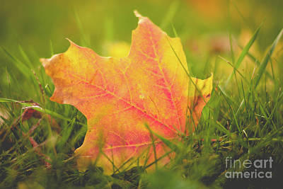 Photograph - One Fallen Leaf by Cheryl Baxter