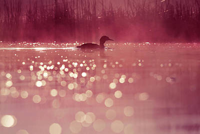 Magical Photograph - One Fine Morning by Roeselien Raimond