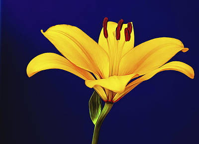 Photograph - Yellow Petals by Maria Coulson