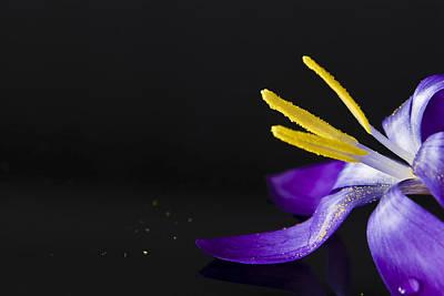 One Flower Print by Svetlana Sewell