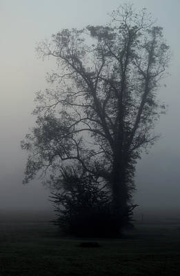 Photograph - One Foggy Morning by Karen Harrison
