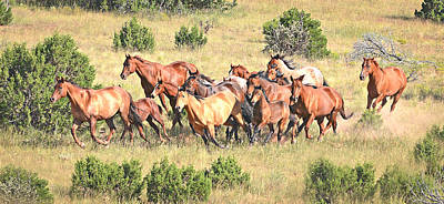 Horses Photograph - One Follows Another by Michael Hamilton