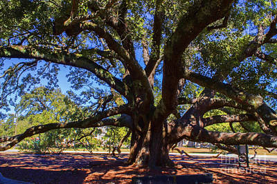 Photograph - One Friendship Tree by Roberta Byram