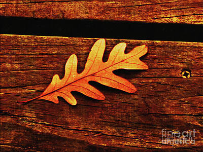 Photograph - One Golden Oak Leaf by Carol F Austin