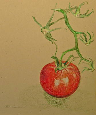 Tomato Drawing - One Great Tomato by Bonnie See