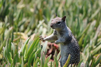 Photograph - Rock Squirrel  by Christy Pooschke