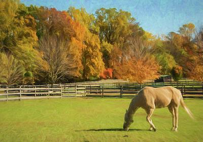 Photograph - One Horse Enjoying Autumn On The Farm by Gary Slawsky
