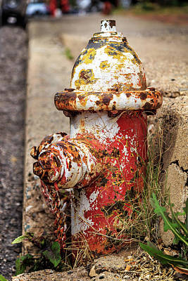 Photograph - One Hydrant - Too Many Dogs by James Eddy