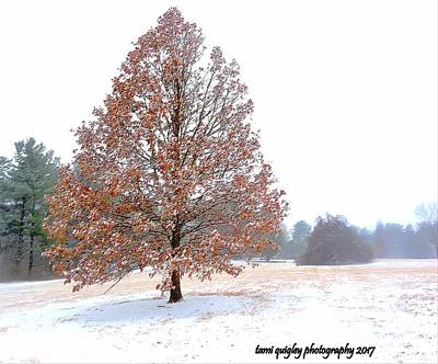 Photograph - One January Day by Tami Quigley