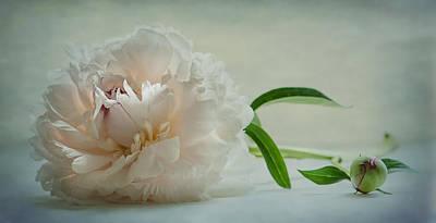 One Last Bloom Art Print by Maggie Terlecki