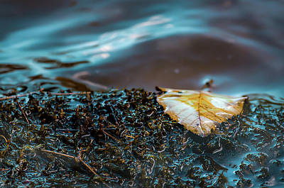 Photograph - One Leaf by Ant Pruitt