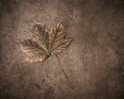 Maple Leafs Photograph - One Leaf December 1st  by Scott Norris
