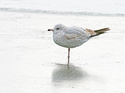 Photograph - One Leg Is Better Than Two..... by Jim Zablotny