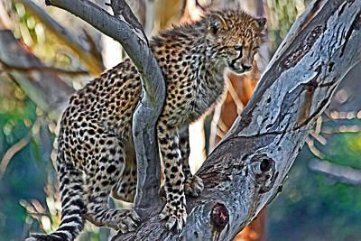 Photograph - One Little Cheetah Sitting In A Tree by Miroslava Jurcik
