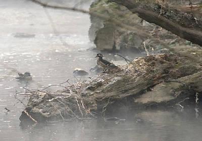Photograph - One Little Ducky by Paul Ross