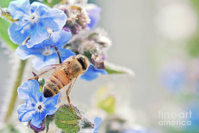 Photograph - One Little Honey Bee by Janie Johnson