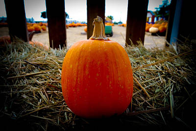Photograph - One Little Pumpkin by Marisela Mungia
