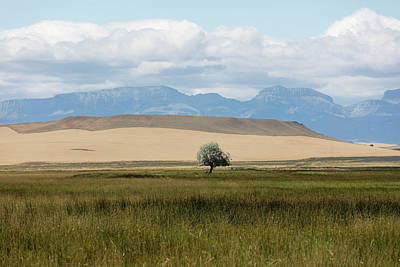 Photograph - One Lone Tree Montana  by John McGraw