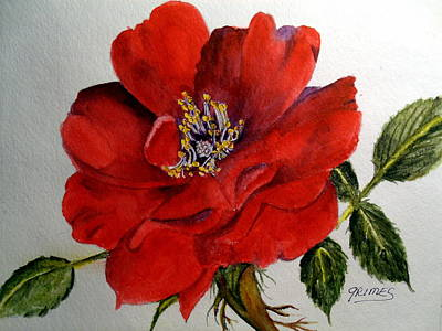 Painting - One Lone Wild Rose by Carol Grimes