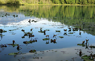 Photograph - One Mile Lake Reflections 1 by Walter Fahmy