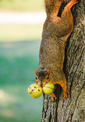 Photograph - One Nut Is Never Enough by Joni Eskridge