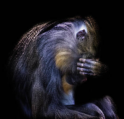 Baboon Photograph - One Of Those Days by Martin Newman