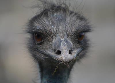 Emu Digital Art - One Of Those Days by Richard Andrews