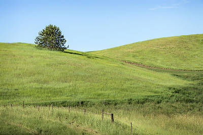 Photograph - One On The Hill by Jon Glaser