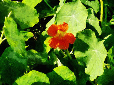 Photograph - One Orange Nasturtium by Susan Savad