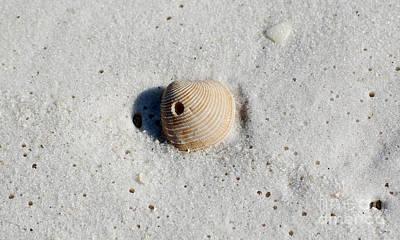 One Orange Striped Sea Shell With Hole Macro On Fine Wet Sand Art Print by Shawn O'Brien